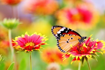 Butterfly lands on a flower. Image courtesy of pexels.com.